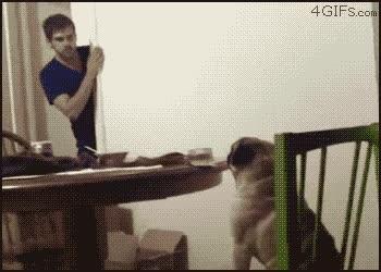 Enlace a Perro bailón y discreto