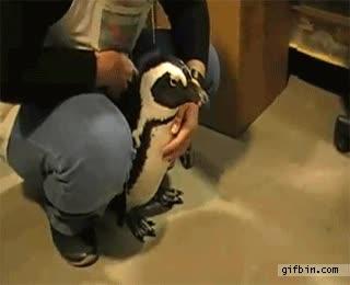 Enlace a ¿Quién quiere un perro pudiendo tener un pingüino?