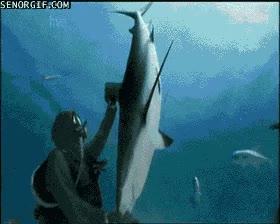Enlace a Hipnotizando a un tiburón