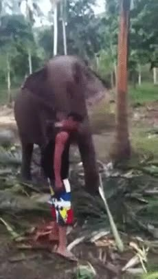 Enlace a Al elefante no le has caído bien