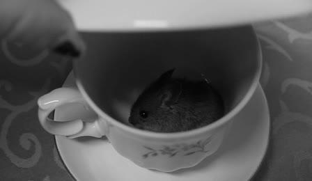 Enlace a ¿Quieres té con ratón o azúcar?