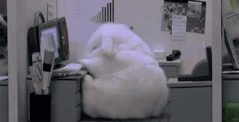 Enlace a Un lunes por la mañana... en Conejolandia