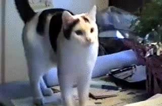 Enlace a Los gatos también te traen la pelota