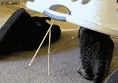 Enlace a Gato-trampa