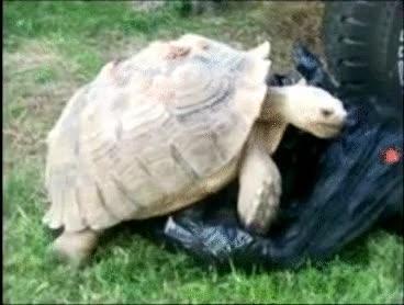 Enlace a Esta tortuga tiene oscuras intenciones
