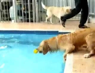 Enlace a Perro vs pelota