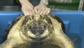 Enlace a Mejor una tortuga que un cuchillo