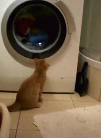 Enlace a Fascinado por la lavadora
