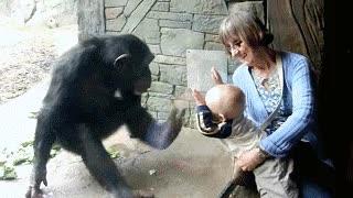 Enlace a Parece que al mono no le hace mucha gracia el niño