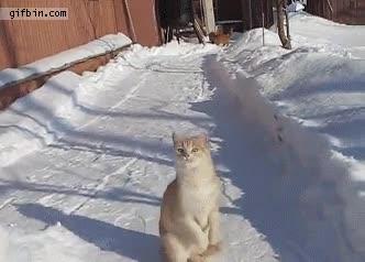Enlace a ¡Nieve para mí!