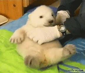 Enlace a Hacer cosquillas a un bebé oso polar