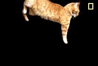 Enlace a Y éste es el mecanismo de aterrizaje de un gato