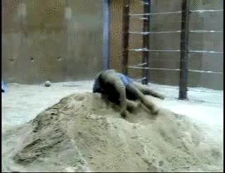 Enlace a Elefante gozando en la arena