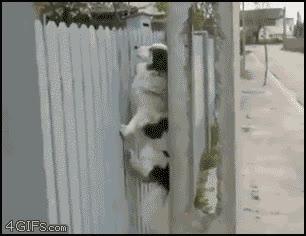 Enlace a Perro muy astuto