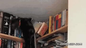 Enlace a ¿Dónde puse ese libro??