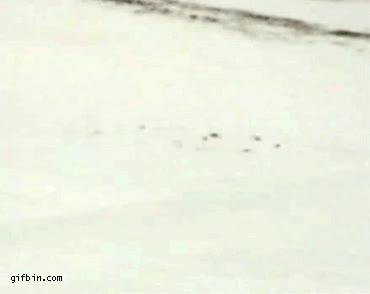 Enlace a Fail en la nieve