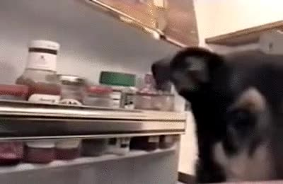 Enlace a Lo mejor es que no enseñes a tu perro a abrir la nevera