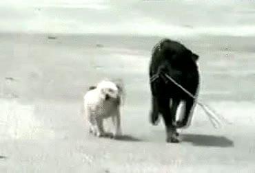 Enlace a Lo mejor que puedes hacer es enseñar a tu perro a pasear a tu otro perro