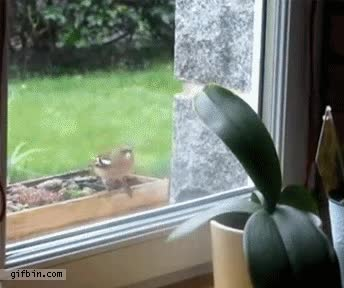 Enlace a ¡Dejadme entrar!