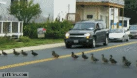 Enlace a Tráfico, nivel: Patos