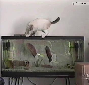 Enlace a El pez cazó al gato