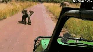 Enlace a ¿Te acuerdas de este gif? Ya sabemos quién conducía, ¡el rey!