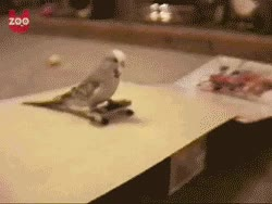 Enlace a ¡Skatebirds!