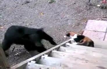 Enlace a Enseñándole al oso quién manda
