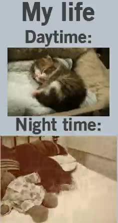 Enlace a Los gatos están así de locos