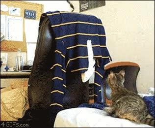 Enlace a Gato Troleado