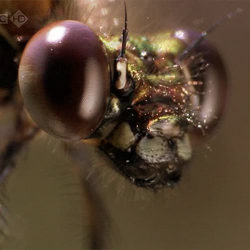 Enlace a La cabeza de una mosca de cerca