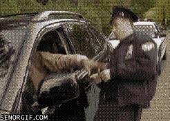 Enlace a Si no quieres pagar la multa, siempre puedes...