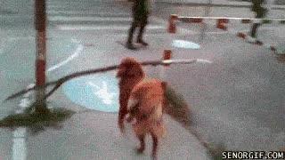 Enlace a Perro con un palo