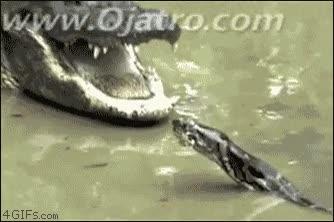 Enlace a Serpiente vs Cocodrilo