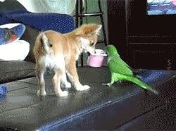 Enlace a ¡Dame mi yogur! ¡No, es mío!