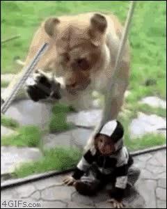 Enlace a Lo que hacía realmente el león [re-mastered version]