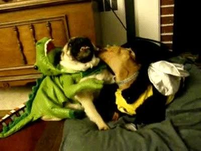 Enlace a Dinosaurio vs abeja