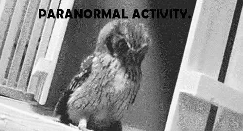 Enlace a Paranormal Activity
