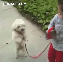 Enlace a Enseñando al perro a bailar como un humano
