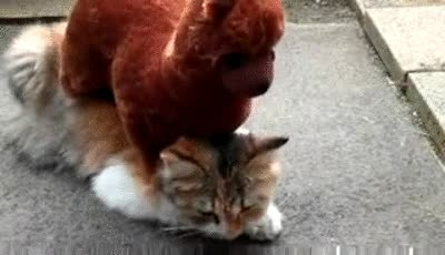 Enlace a Gato con criado que le hace masajes