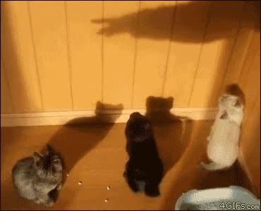 Enlace a Engañando a los gatos con sombras