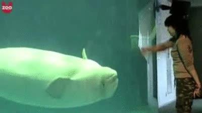 Enlace a Entrenando a una ballena