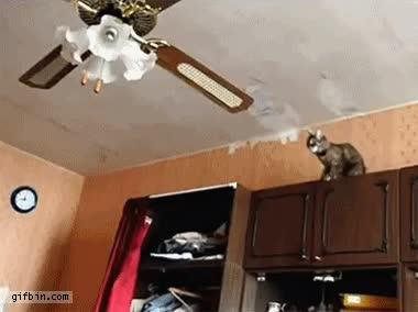 Enlace a Gato se cuelga de un ventilador