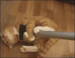 Enlace a ¿Por qué les gusta tanto la aspiradora a los gatos?