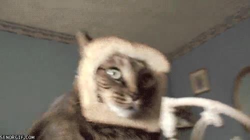 Enlace a Cómo trollear a un gato