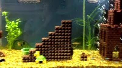 Enlace a Super Mario Acuario