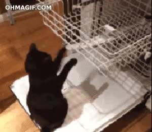Enlace a Juego infinito para tu gato