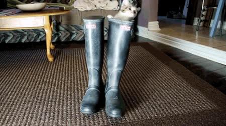 Enlace a ¿Gato con botas? Lo estás haciendo mal