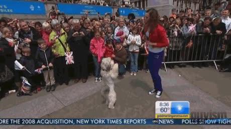 Enlace a El perro bailongo