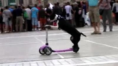 Enlace a Perro en patinete